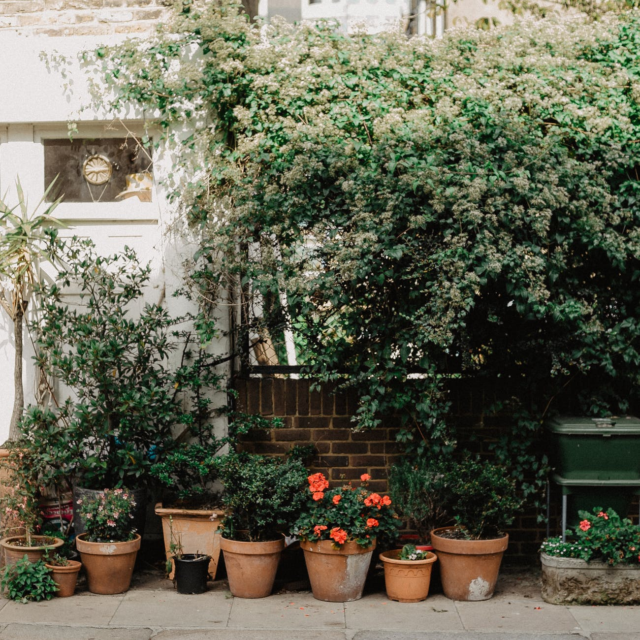 green plants on brown clay pots